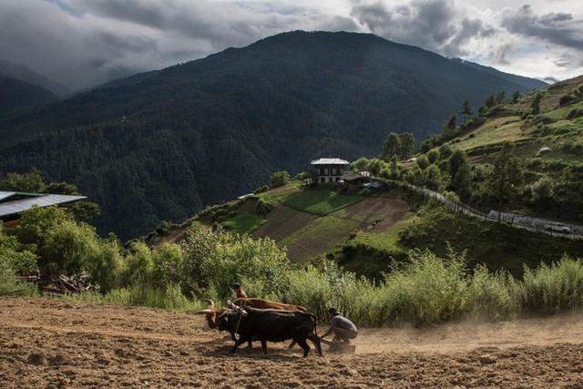 Chào mừng bạn đến với Bhutan, đất nước có mức khí thải carbon âm nhờ 72% diện tích là rừng che phủ - Ảnh 5.