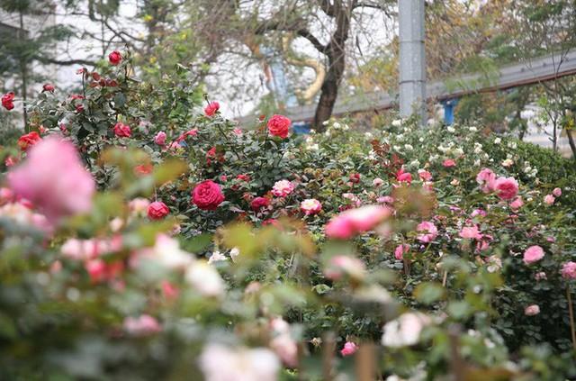 Cận cảnh Lễ hội hoa hồng Bulgaria lần thứ 2 trước giờ khai mạc  - Ảnh 2.
