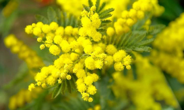 Tại sao đàn ông nên tặng hoa cho người yêu thương của mình trong ngày 8/3? Câu chuyện bắt nguồn từ một ý nghĩa tuyệt vời - Ảnh 3.