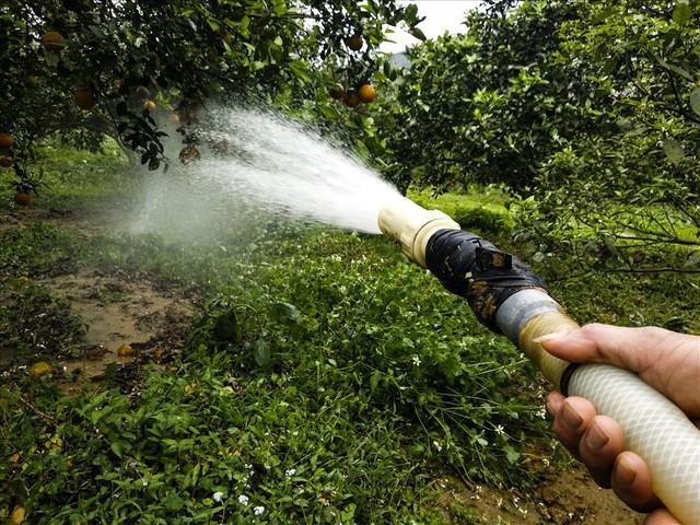 Cận cảnh vườn cam cho lãi gần 1 tỷ đồng/năm của nông dân Hòa Bình - Ảnh 9.