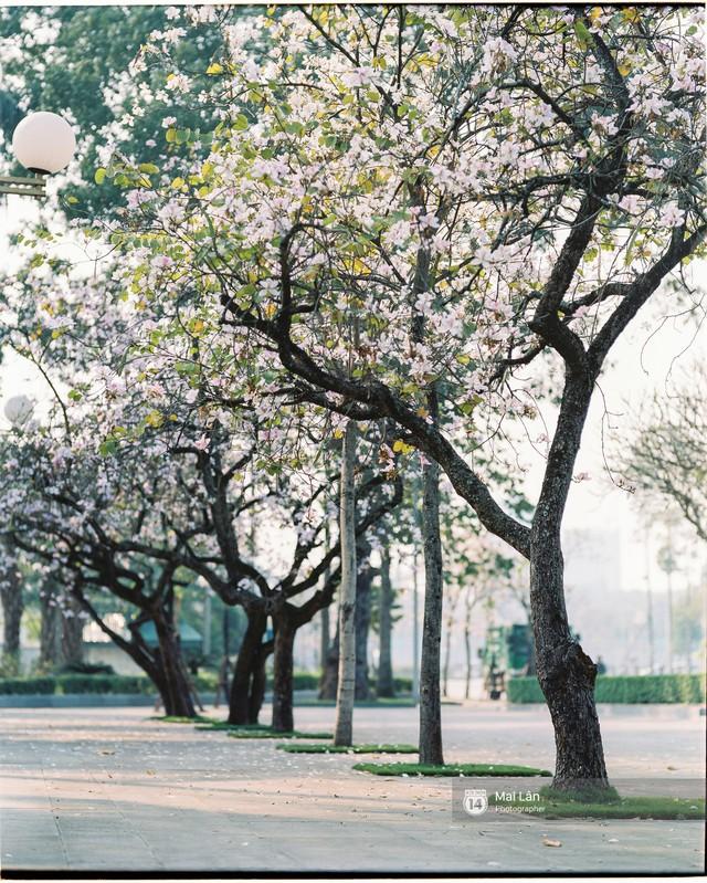 Chùm ảnh: Đây là Hà Nội, của những ngày trắng muốt hoa sưa... - Ảnh 11.