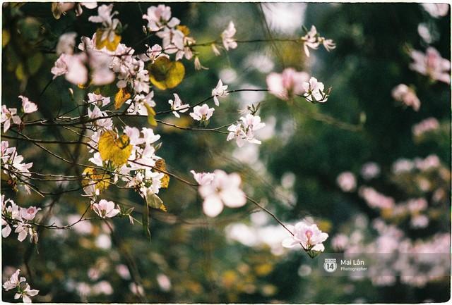 Chùm ảnh: Đây là Hà Nội, của những ngày trắng muốt hoa sưa... - Ảnh 14.