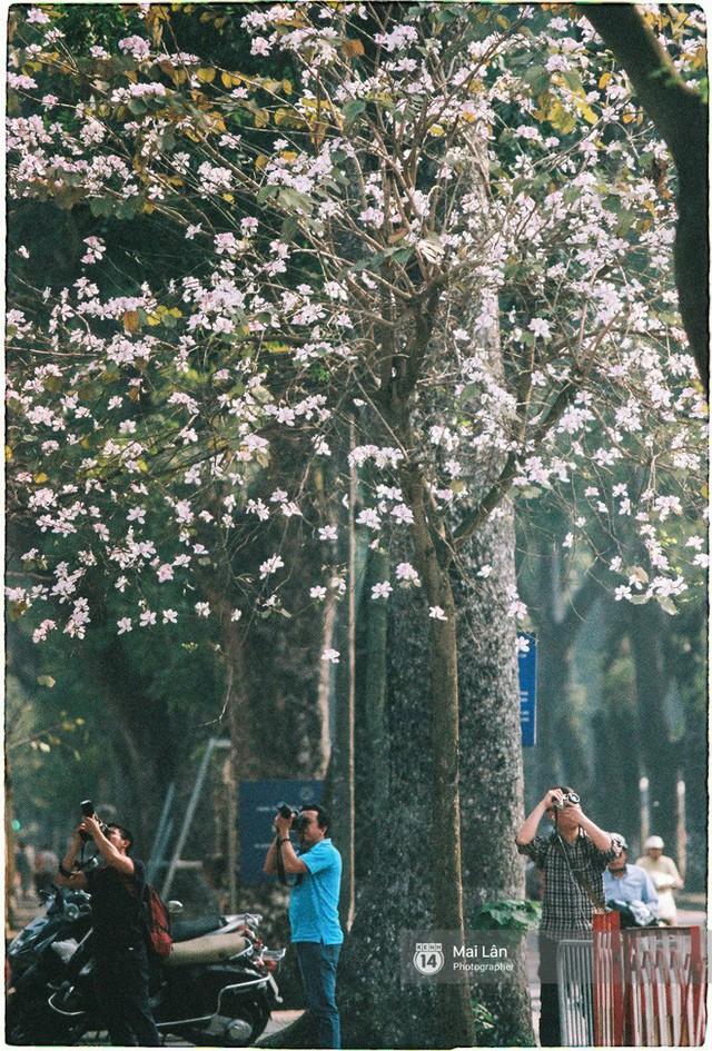 Chùm ảnh: Đây là Hà Nội, của những ngày trắng muốt hoa sưa... - Ảnh 19.