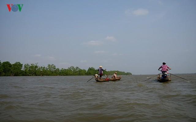 Kiếm hàng chục triệu nhờ săn cá bông lau sông Hậu - Ảnh 1.