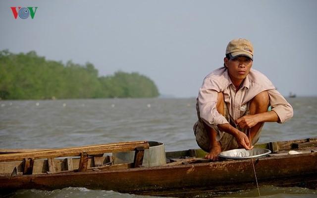 Kiếm hàng chục triệu nhờ săn cá bông lau sông Hậu - Ảnh 3.