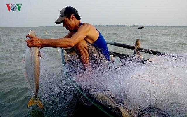 Kiếm hàng chục triệu nhờ săn cá bông lau sông Hậu - Ảnh 8.