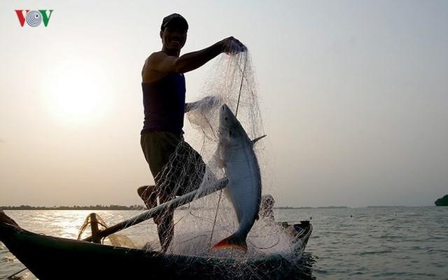 Kiếm hàng chục triệu nhờ săn cá bông lau sông Hậu - Ảnh 10.