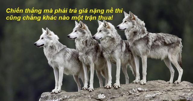 Chuyện cuối tuần: Câu chuyện chó sói xung trận - hãy lạnh lùng như bầy sói khi chọn cách đối đầu với thử thách - Ảnh 1.