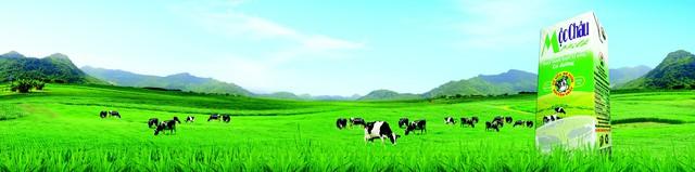 GTNfoods tiếp nối lịch sử 60 năm thành lập và phát triển của Nông Trường Sữa - Chè Mộc Châu - Ảnh 1.