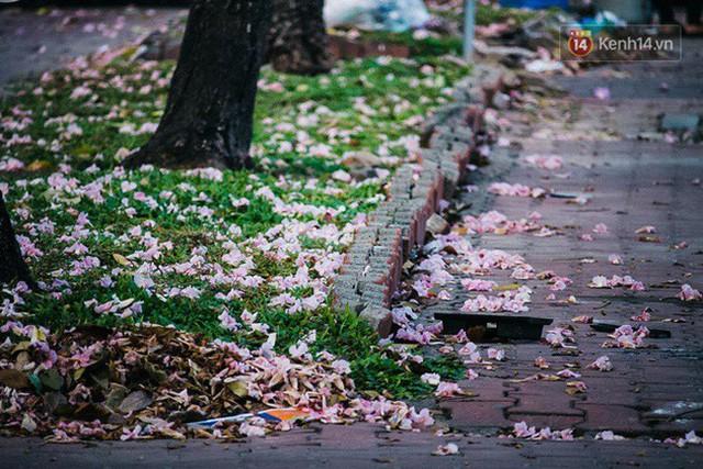 Sài Gòn trong mùa hoa kèn hồng nở rộ, khắp phố phường như đang vào xuân - Ảnh 3.