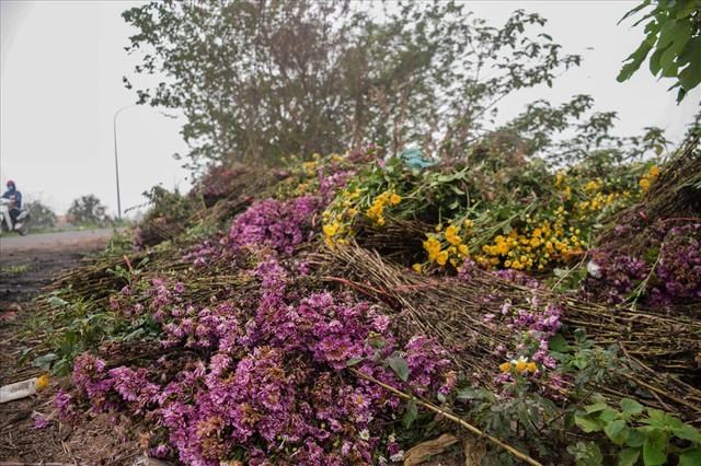 Nông dân Tây Tựu ngao ngán: Hoa cúc được mùa nhưng mất giá - Ảnh 3.