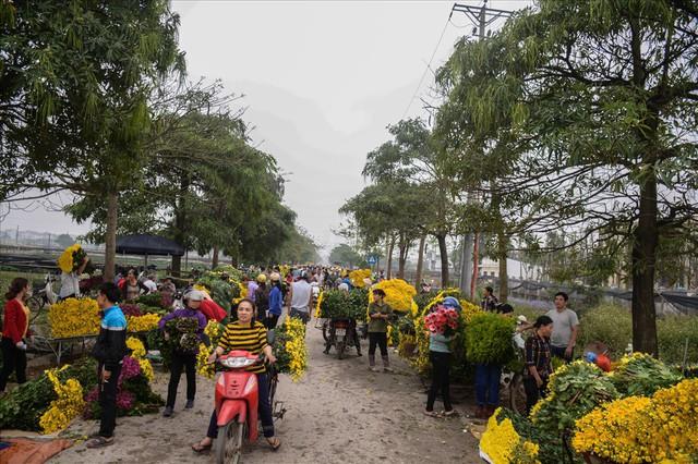 Nông dân Tây Tựu ngao ngán: Hoa cúc được mùa nhưng mất giá - Ảnh 4.