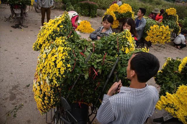 Nông dân Tây Tựu ngao ngán: Hoa cúc được mùa nhưng mất giá - Ảnh 5.
