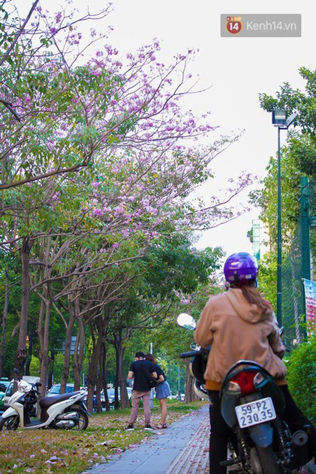 Sài Gòn trong mùa hoa kèn hồng nở rộ, khắp phố phường như đang vào xuân - Ảnh 8.