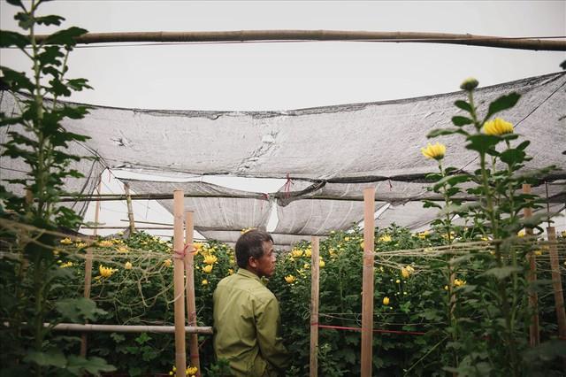 Nông dân Tây Tựu ngao ngán: Hoa cúc được mùa nhưng mất giá - Ảnh 8.