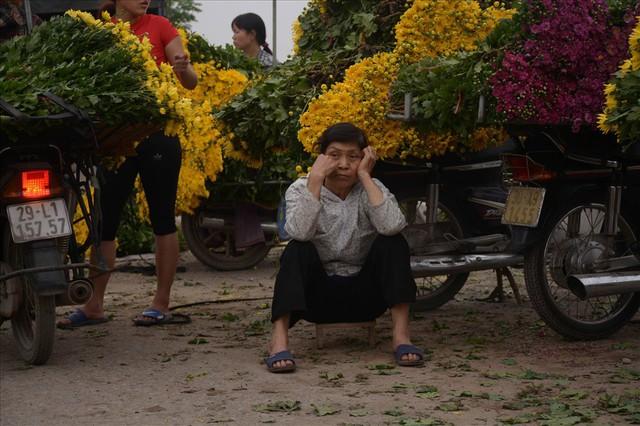 Nông dân Tây Tựu ngao ngán: Hoa cúc được mùa nhưng mất giá - Ảnh 9.