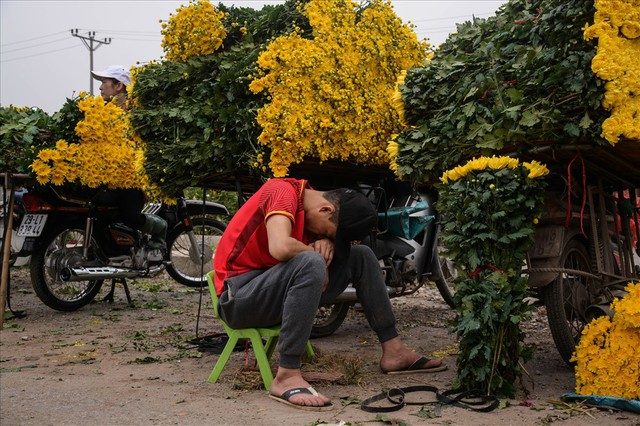 Nông dân Tây Tựu ngao ngán: Hoa cúc được mùa nhưng mất giá - Ảnh 10.