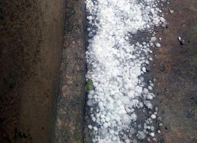 Hai trận mưa đá liên tiếp làm mận rụng đầy gốc ở Sơn La - Ảnh 1.