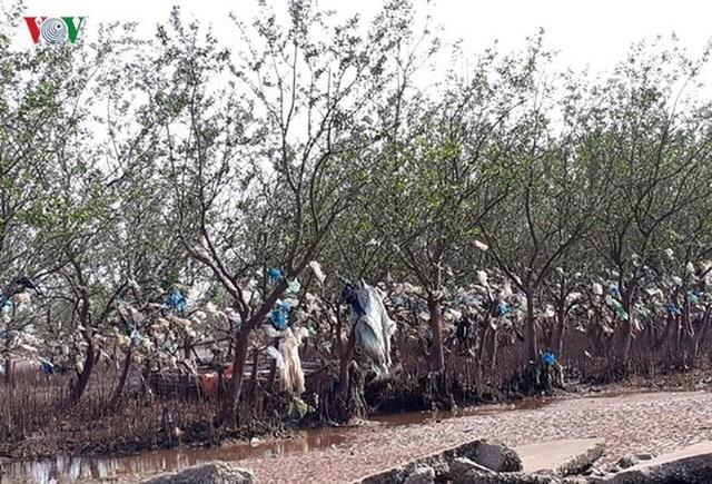 Ảnh: Kinh hoàng rừng cây treo đầy rác ở Thanh Hoá - Ảnh 1.