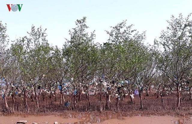 Ảnh: Kinh hoàng rừng cây treo đầy rác ở Thanh Hoá - Ảnh 6.