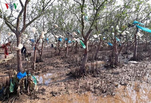 Ảnh: Kinh hoàng rừng cây treo đầy rác ở Thanh Hoá - Ảnh 7.