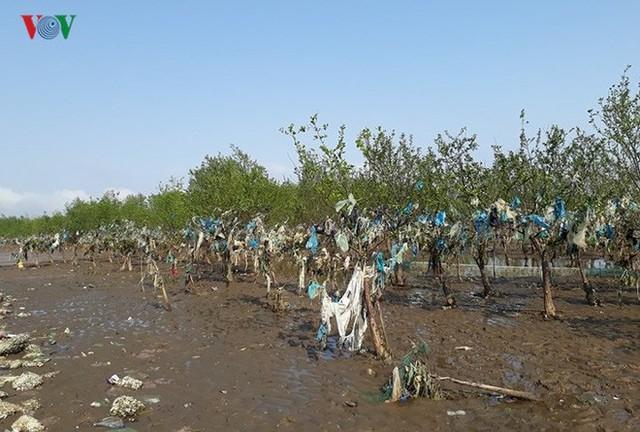 Ảnh: Kinh hoàng rừng cây treo đầy rác ở Thanh Hoá - Ảnh 9.