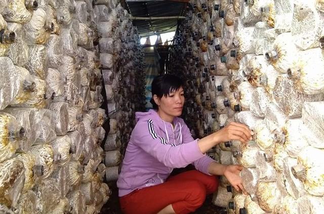 Khởi nghiệp từ 20 triệu đồng, mỗi năm thu nửa tỷ đồng từ nấm - Ảnh 1.