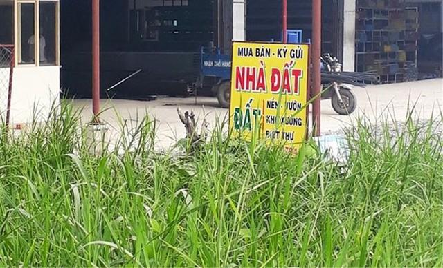 Sốt đất nền lan khắp Sài Gòn, đua nhau tách thửa bán nền - Ảnh 6.
