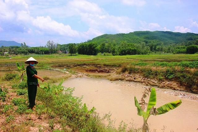 Nông dân ở Bình Định phải đóng tiền mới được thả vịt ra đồng - Ảnh 1.