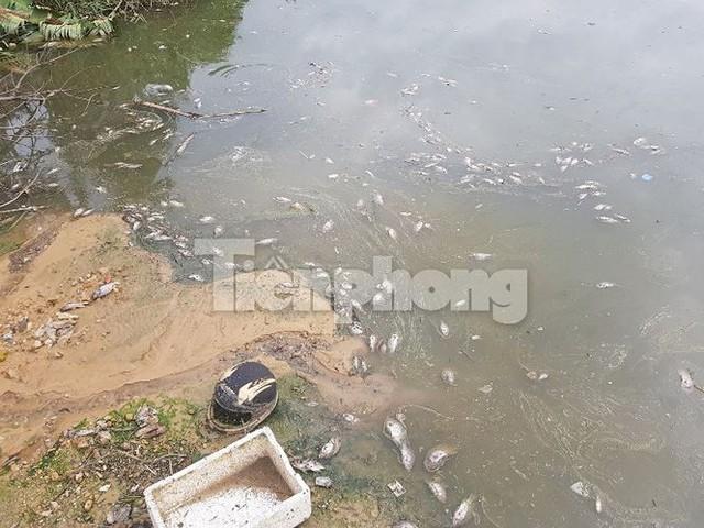 Cá chết hàng loạt ở 4 hồ thông ra vịnh Hạ Long   - Ảnh 3.