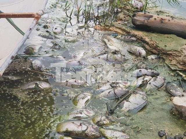 Cá chết hàng loạt ở 4 hồ thông ra vịnh Hạ Long   - Ảnh 4.