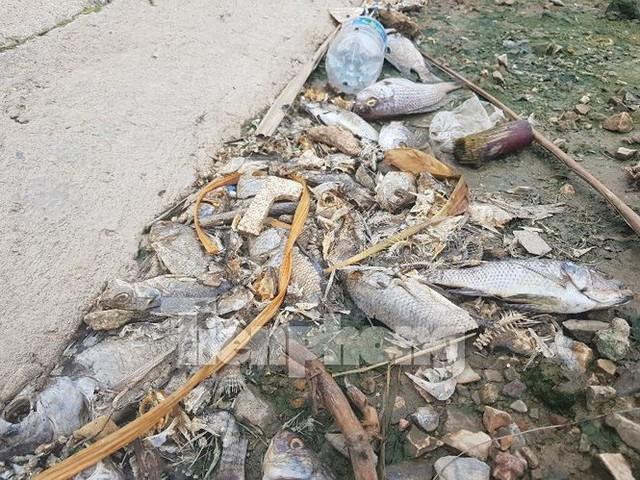 Cá chết hàng loạt ở 4 hồ thông ra vịnh Hạ Long   - Ảnh 5.