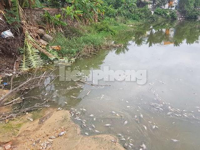 Cá chết hàng loạt ở 4 hồ thông ra vịnh Hạ Long   - Ảnh 8.