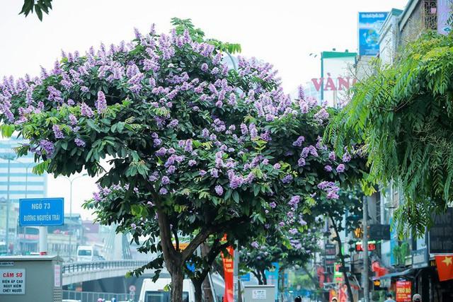 Ngắm hoa bằng lăng nhuộm tím trời Hà Nội - Ảnh 10.