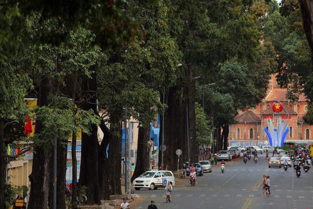 Sài Gòn đẹp mê hồn với mùa chò nâu xoay tít - Ảnh 2.