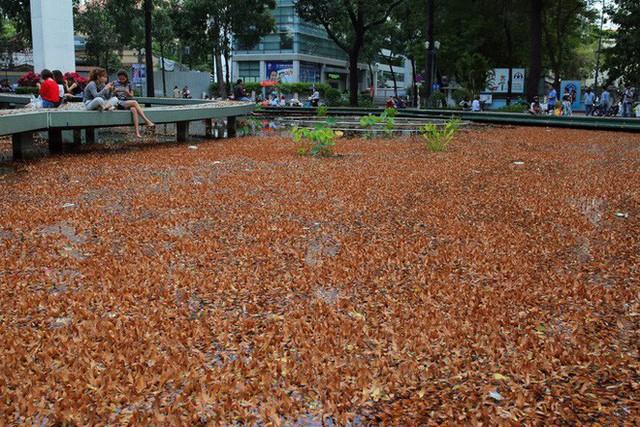 Sài Gòn đẹp mê hồn với mùa chò nâu xoay tít - Ảnh 13.