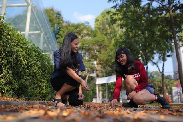 Sài Gòn đẹp mê hồn với mùa chò nâu xoay tít - Ảnh 3.