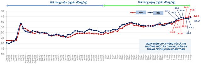 Bất chấp bão tố thị trường, cổ phiếu Dabaco (DBC) vẫn ngược dòng bứt phá nhờ sự hồi sinh của giá lợn - Ảnh 3.