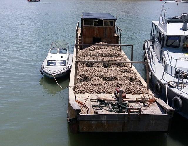 Bắt giữ 30 tấn hàu giống không nguồn gốc, trị giá hơn 300 triệu đồng - Ảnh 1.