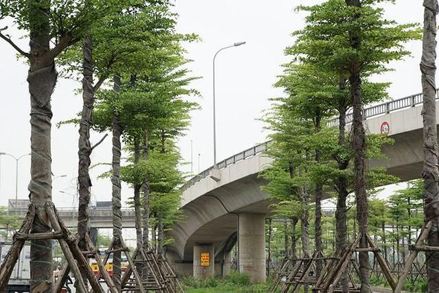 Những hàng cây xanh mướt thẳng tắp ở đầu cầu Thanh Trì - Ảnh 13.