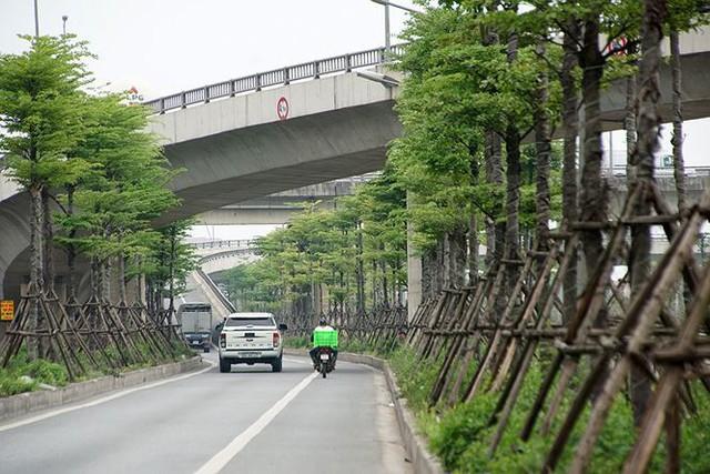 Những hàng cây xanh mướt thẳng tắp ở đầu cầu Thanh Trì - Ảnh 3.