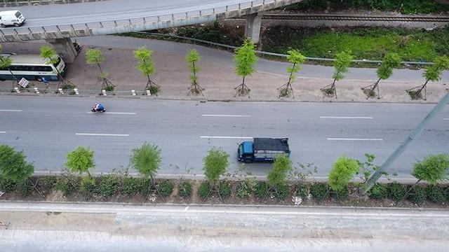 Những hàng cây xanh mướt thẳng tắp ở đầu cầu Thanh Trì - Ảnh 4.