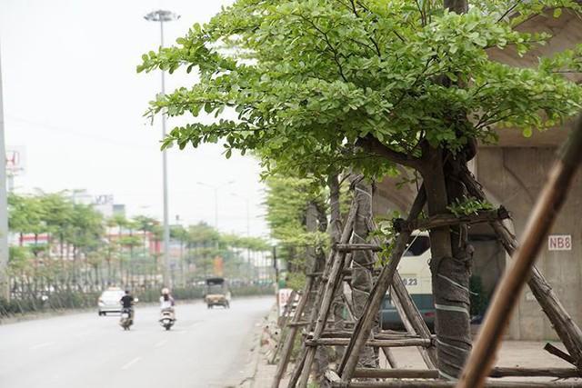Những hàng cây xanh mướt thẳng tắp ở đầu cầu Thanh Trì - Ảnh 9.