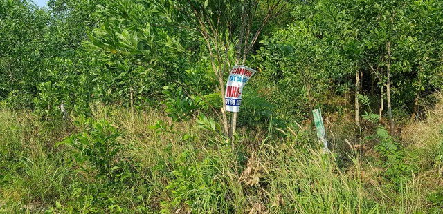 Muôn kiểu buôn đất ở Phú Quốc: Một phân khúc ngầm đang hình thành - Ảnh 16.
