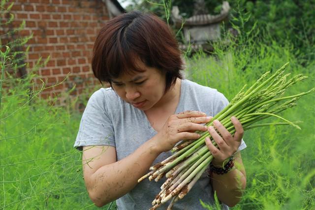 Chiêm ngưỡng vườn măng tây cho thu nhập gần 2 tỷ/năm - Ảnh 2.