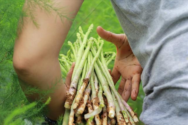 Chiêm ngưỡng vườn măng tây cho thu nhập gần 2 tỷ/năm - Ảnh 5.