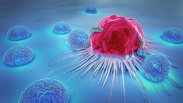 Liệu chúng ta có thể giết chết tế bào ung thư khi chúng đang ngủ? - Ảnh 3.