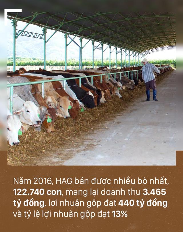 [PHOTO STORY]: Số phận đàn bò nghìn tỷ của bầu Đức - Ảnh 8.