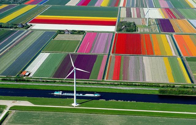Cách quốc gia có diện tích chỉ bằng 1/8 Việt Nam chi phối ngành hoa 100 tỷ USD thế giới: Đầu tư công nghệ, giao dịch hoa như cổ phiếu - Ảnh 1.