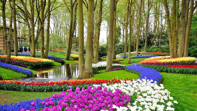 Cách quốc gia có diện tích chỉ bằng 1/8 Việt Nam chi phối ngành hoa 100 tỷ USD thế giới: Đầu tư công nghệ, giao dịch hoa như cổ phiếu - Ảnh 11.
